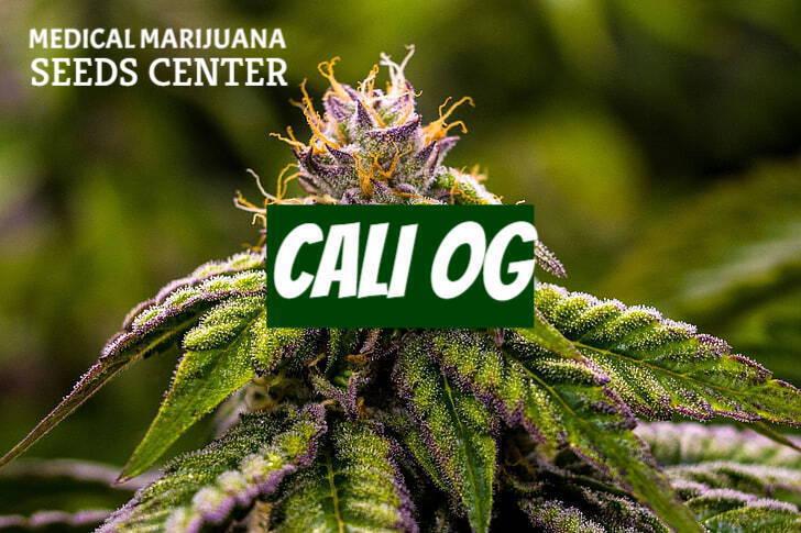 Cali OG Seeds