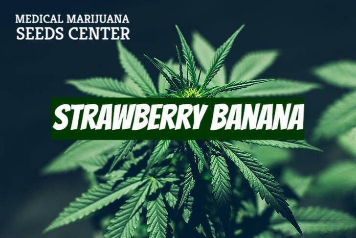 Strawberry Banana Strain Seeds