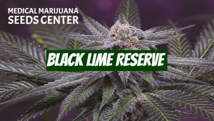 Black Lime Reserve Seeds